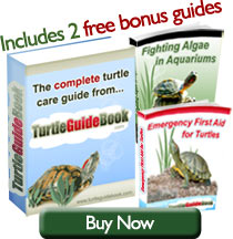 Complete Terrapin Care Guide