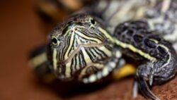 How to care for a terrapin